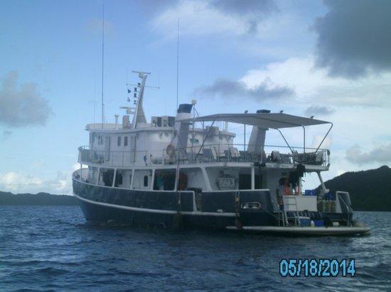 Fish 'n Fins Palau: Ocean Hunter III