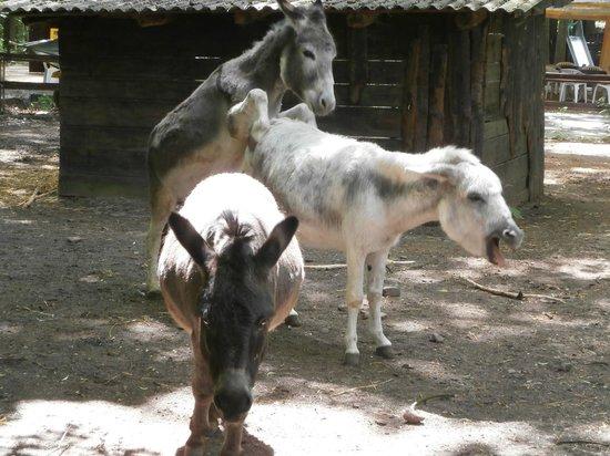 Kobelt Zoo