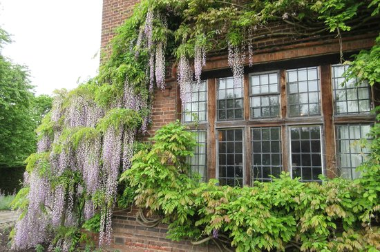 Goddards House and Garden : Wisteria
