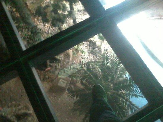 Kunming Animal Museum : โซนจำลองป่าเขตร้อน