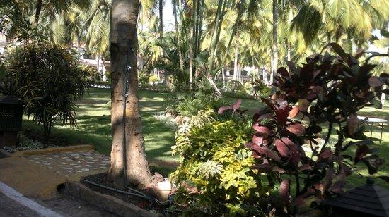 Golden Palms Hotel & Spa: Lawns..