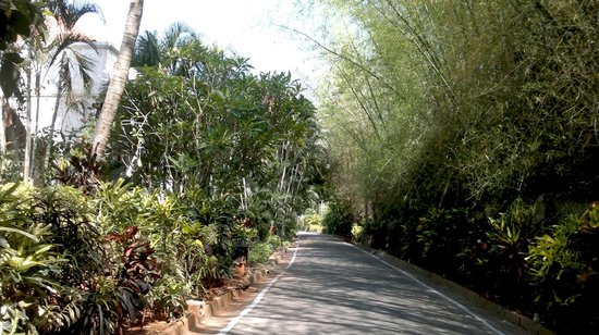 Golden Palms Hotel & Spa: Walkway..