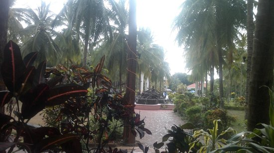 Golden Palms Hotel & Spa: The lawns..