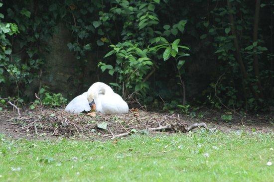 Petite Venise - tranquille sur son nid
