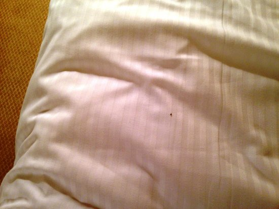 The Omni King Edward Hotel: Bed