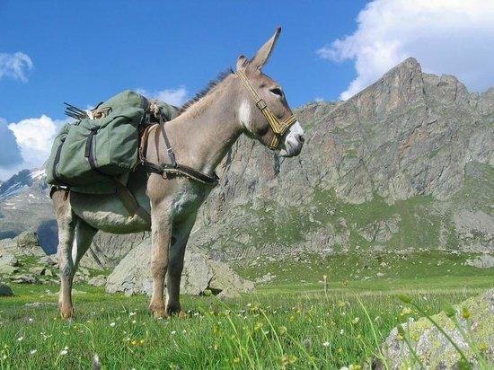 Avec un âne - Randonnée