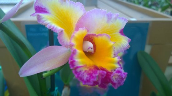 Marylou's Big Island Guided Tours - Private Tours: Akatsuka Orchid Farm
