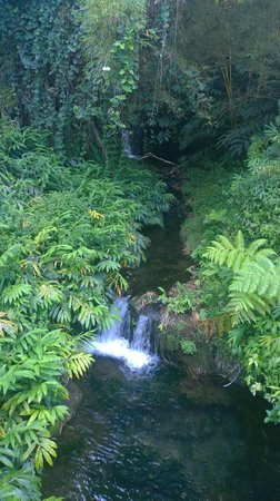 Marylou's Big Island Guided Tours - Private Tours: On the path to Akaka Falls
