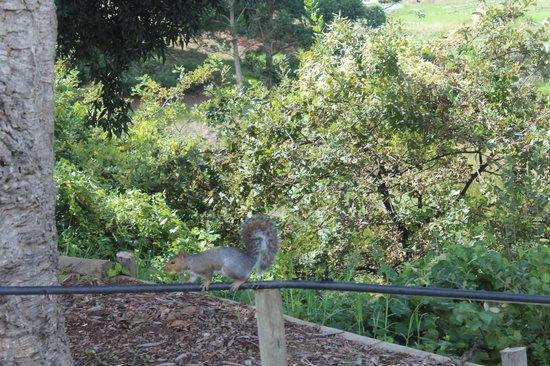 Buitenverwachting: Vida selvagem nos jardins