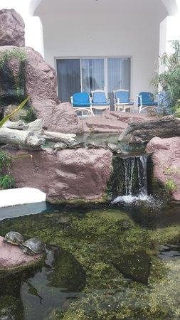 Pueblo Bonito Los Cabos: Turtle Pond at Hotel