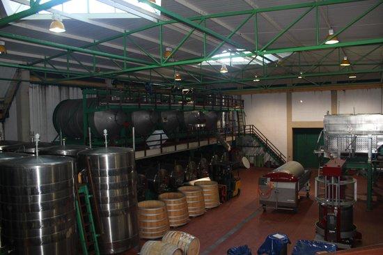Klein Constantia : Área de fabricação do vinho