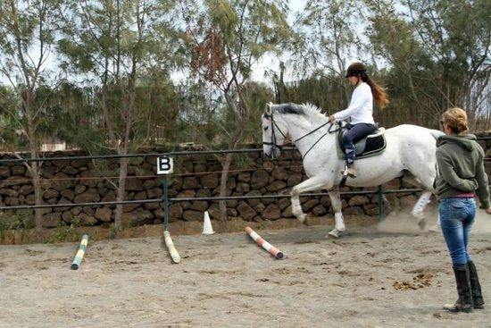 Centro Hípico Los Pinos Verdes: horse riding fuerteventura
