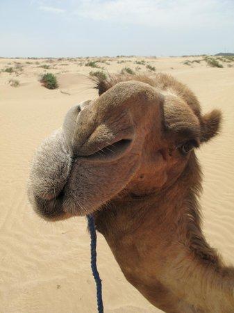 Ranch de Diabat: camel trek