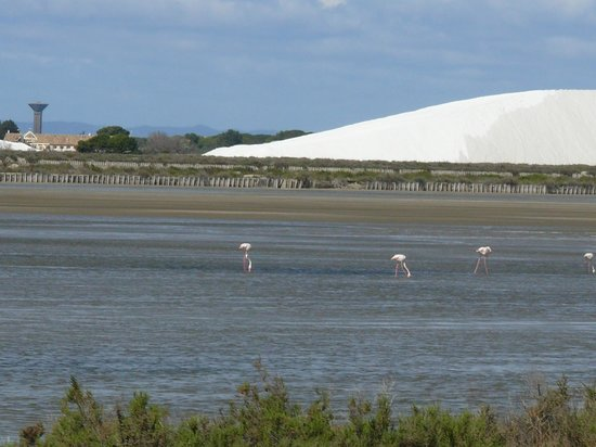 Salin d'Aigues-Mortes : le saline e i suoi fenicotteri