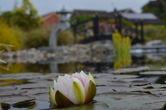 Grosvenor Pulford Hotel & Spa: The very tranquil and serene Asian Sensory Garden