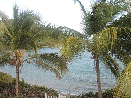 Coconut Coast Villas: View from my balcony