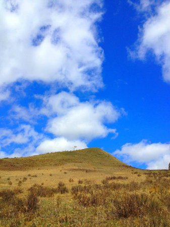 Glenbow Ranch Provincial Park : A lonely tree sits peacefully perched on top of the glorious hill