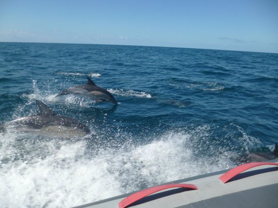 Dolphins Driven: The Dolphins out at sea