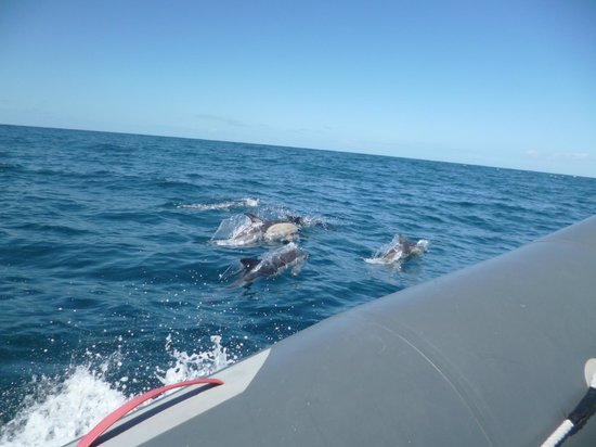 Dolphins Driven: Dolphins out at sea