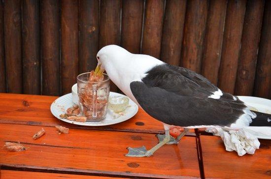 Lookout Deck: Os pássaros estão sempre presentes no deck do Lookout