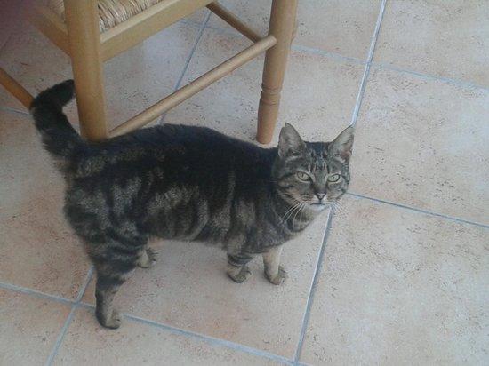 La Croix Galliot : Le chat