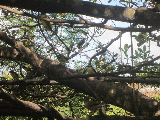 Eco Resort : vogels bij de ontbijtruimte