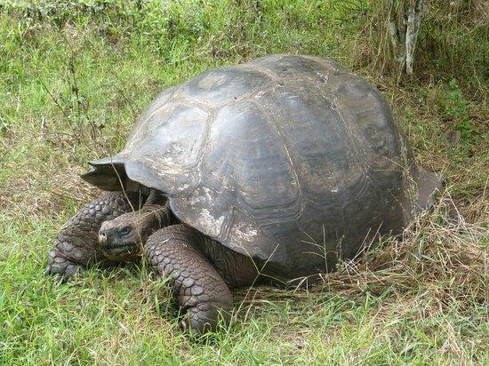Reserva El Chato: tartaruga gigante