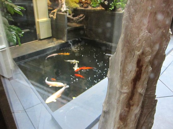 Hotel Estherea: View of koi pond from the elevator