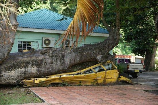 Dominica Botanic Gardens : onibus amassado