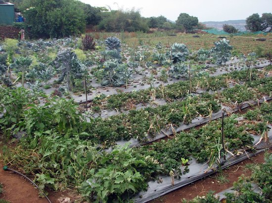 Mahabaleshwar Hill Station: Strawberry Farm