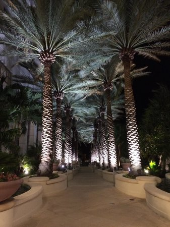 Loews Miami Beach Hotel: Walkway to the pool at night