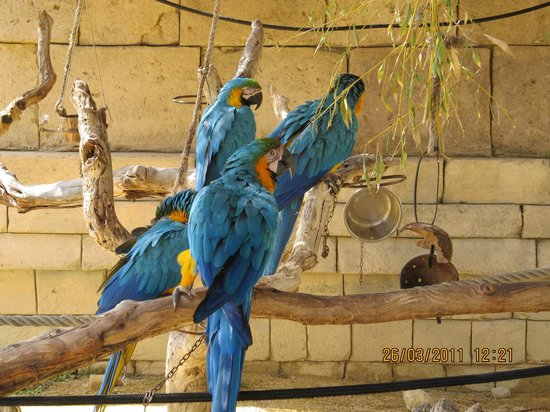 Terra Natura : Guacamayos azules