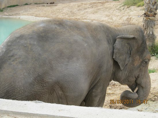 Terra Natura : Elefantes