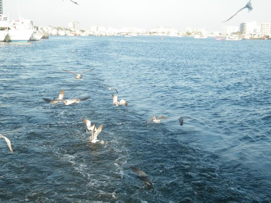 Southern Star Dolphin Cruise: Feeding the seagulls off the appropriately named Poop Deck