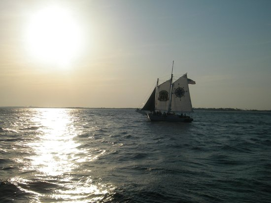 Southern Star Dolphin Cruise: A sailboat cruising by..