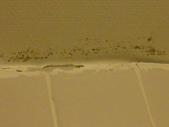 Hotel Alstor: Taket i dusjen var lite innbydende!