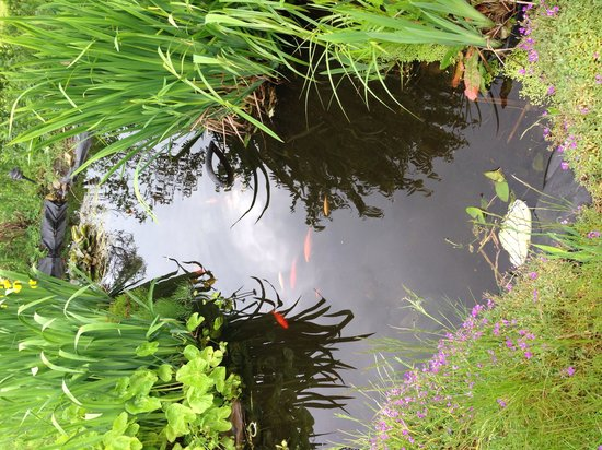 The Red Lion Country Inn & Rooms: Pond