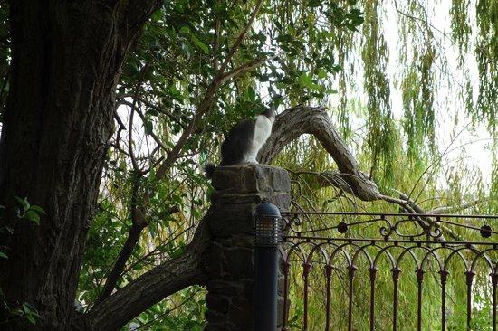 Lentas Maravillas: quintal