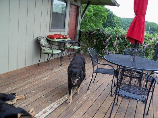 Beaver Lake View Resort: Wilson the greeter!