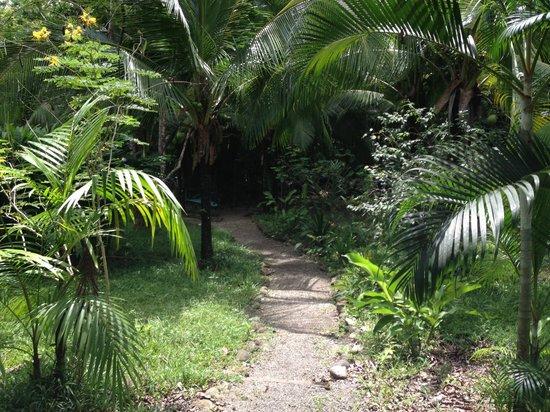 Osa Clandestina: Garden