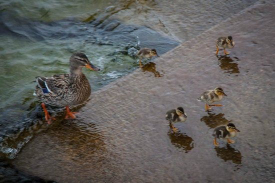 Hotel Gardenia al Lago: breakfast visitors