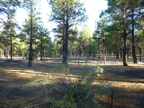 Sunset Crater Volcano National Monument : Bonita Campground-Sunset Crater