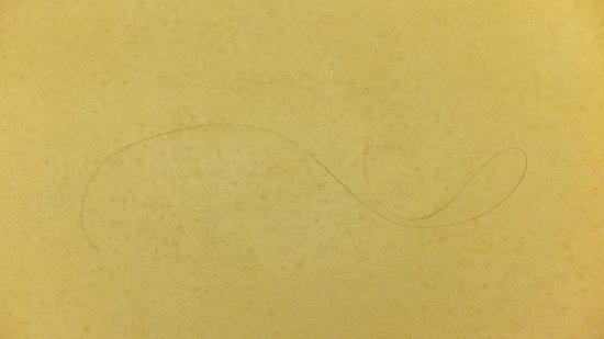 Radisson Hotel Philadelphia Northeast : One of the Hairs in Tub