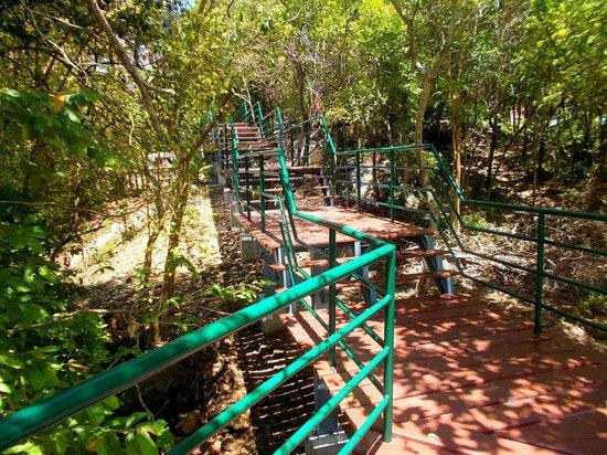 Songkhla Zoo : zoo tree top walkway around the elephant pen