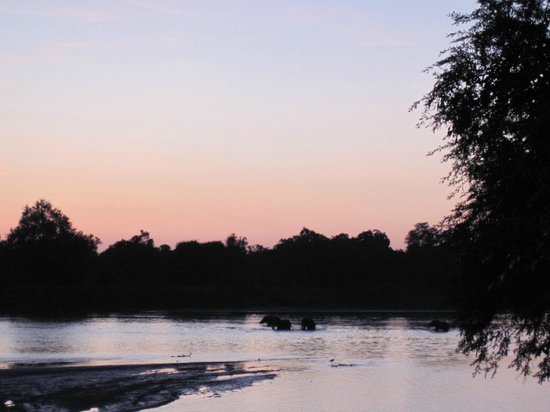 Croc Valley Camp: Elephants crossing the river, view from camp