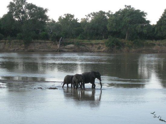 Croc Valley Camp: View from room - elephants crossing the river