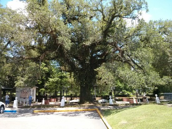 Evangeline Oak, St. Martinville, LA