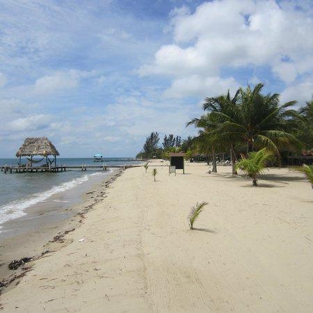 Green Parrot Beach Houses: The beach