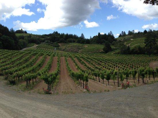 Schweiger Vineyards: vineyard