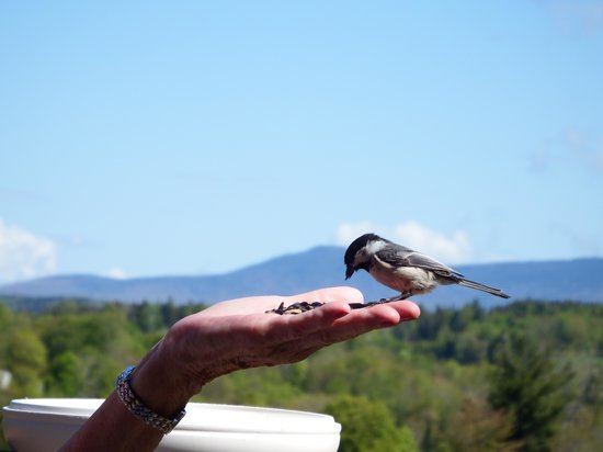 Clifford Country Bed & Breakfast: Chickadee